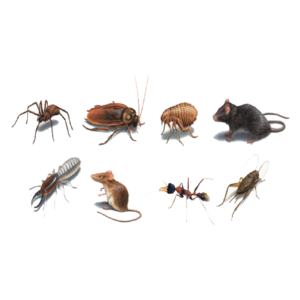 pest-control-56