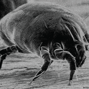 pest-control-58